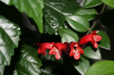фото альбом мамины цветы