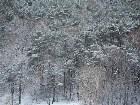 фотографии - Вид из моего окна-зимний лес - Моя квартира