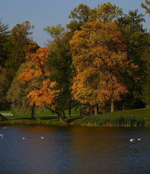 фотографии альбом Санкт Петербург Осень золотая 2