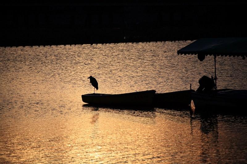 фото альбом Япония Восход