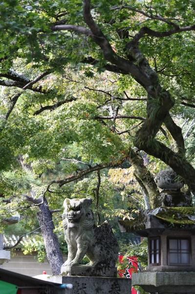 фото альбом Япония Лев