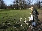 фото - В парке - Англия