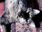 фото - А говорят кошки зелень не едят)) - Кошки