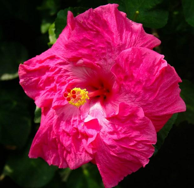 фото альбом Цветы IMG_0485.jpg