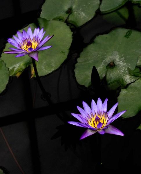 фото альбом Цветы IMG_0514.jpg
