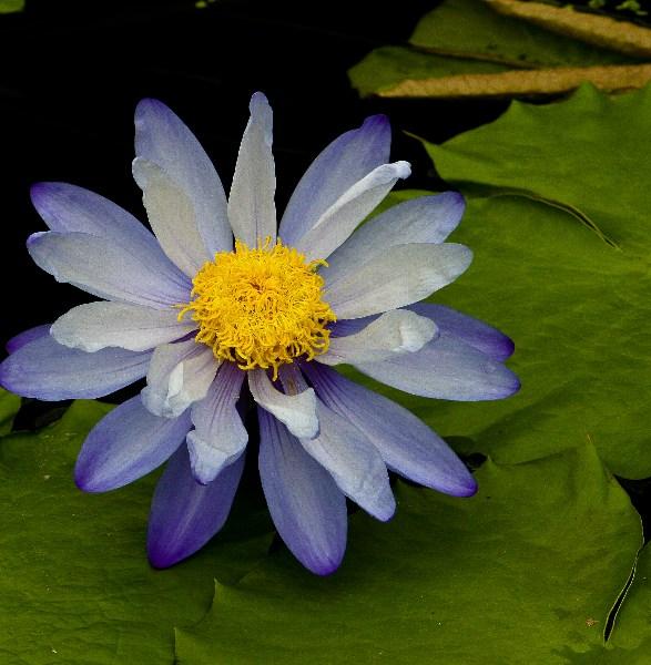 фото альбом Цветы IMG_0548-Edit.jpg