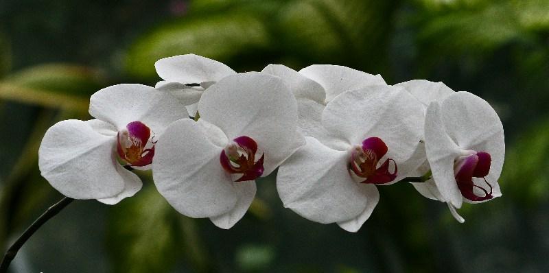 фото альбом Цветы IMG_0551-Edit.jpg
