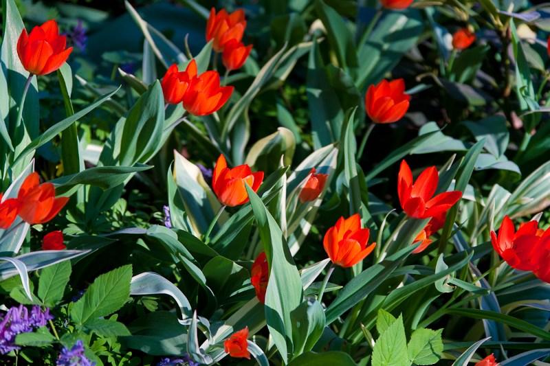 фото альбом Цветы _Z8D7331.jpg