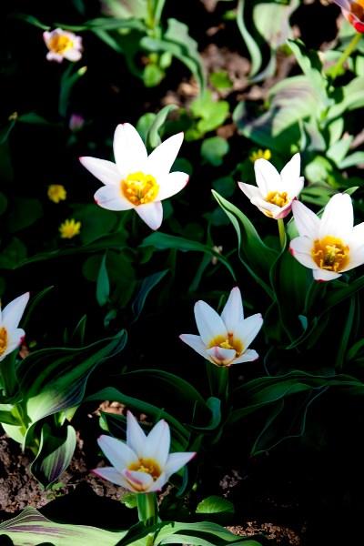 фотографии альбом Цветы _Z8D7391.jpg