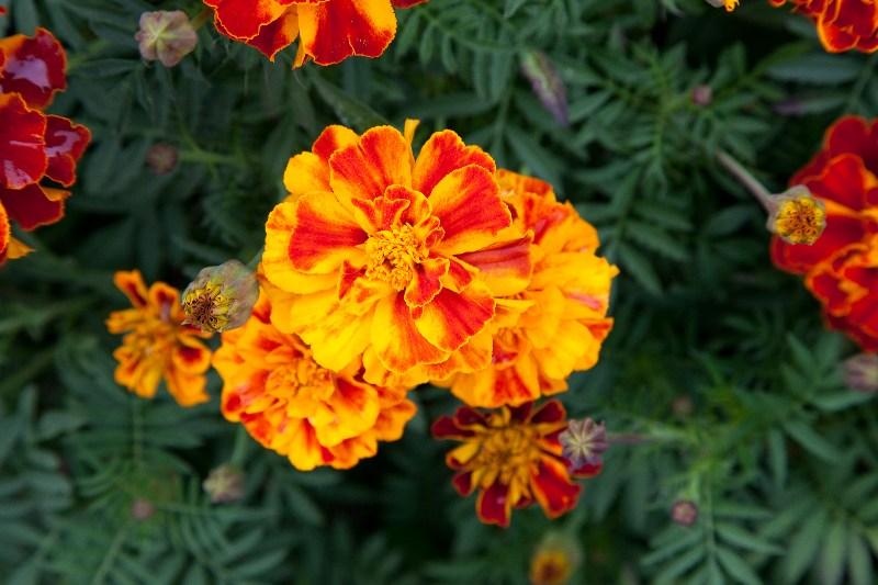 фото альбом Цветы _MG_5382.jpg