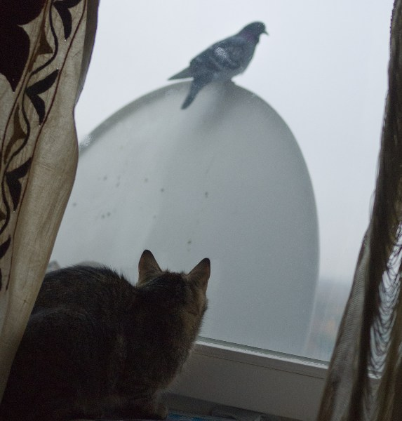 фото альбом Кошки P1060286.jpg