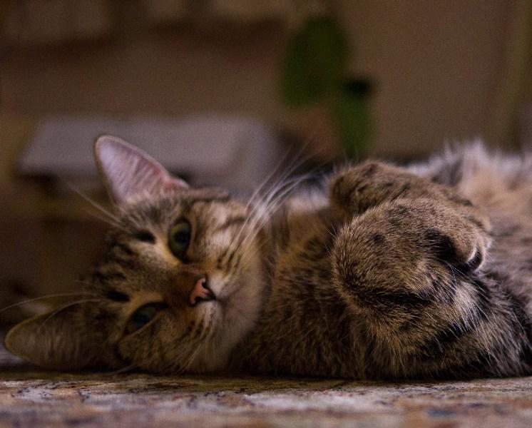 фото альбом Кошки P1060344.jpg
