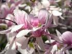 фото - Flowers - Цветы