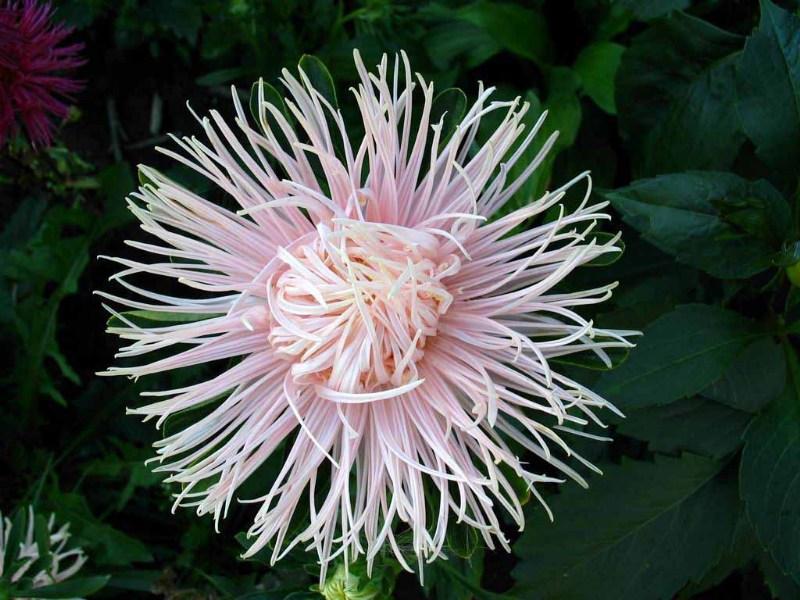 фотографии альбом Цветы Flowers