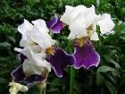 фотографии - Flowers - Цветы