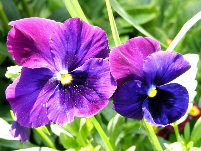 фото альбом Цветы Flowers