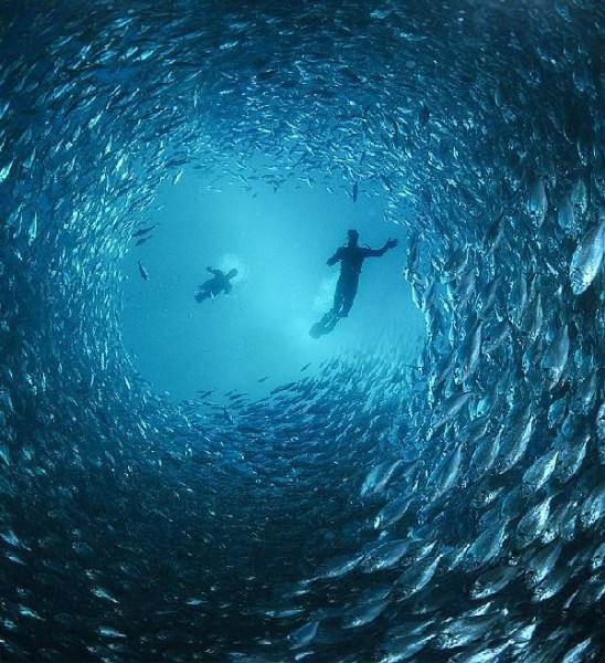 фотографии альбом Водный мир Water life
