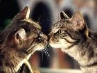 фото - Кошки и коты, котятк ... - Кошкины животные ;)