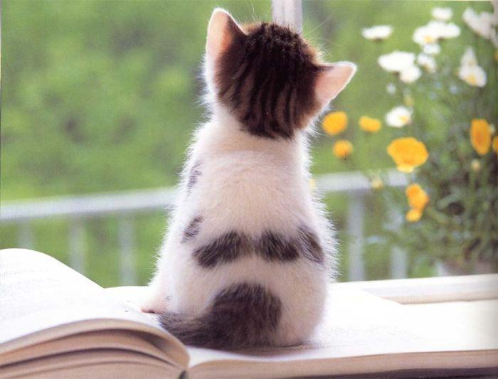 фото альбом Кошкины животные ;) Кошки и коты, котятки и котяры