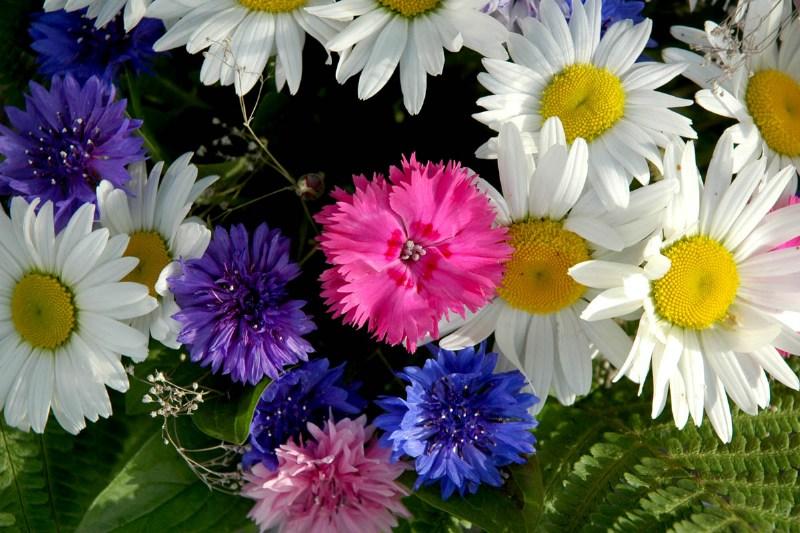 фото альбом Цветы то чем торгуют бабушки