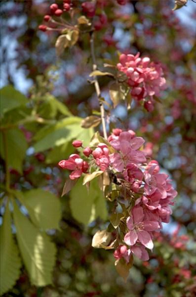 фото альбом Весна Цветы