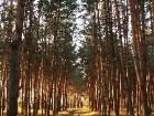 фото - Закат в лесу - Леса, озера - Загородная природа