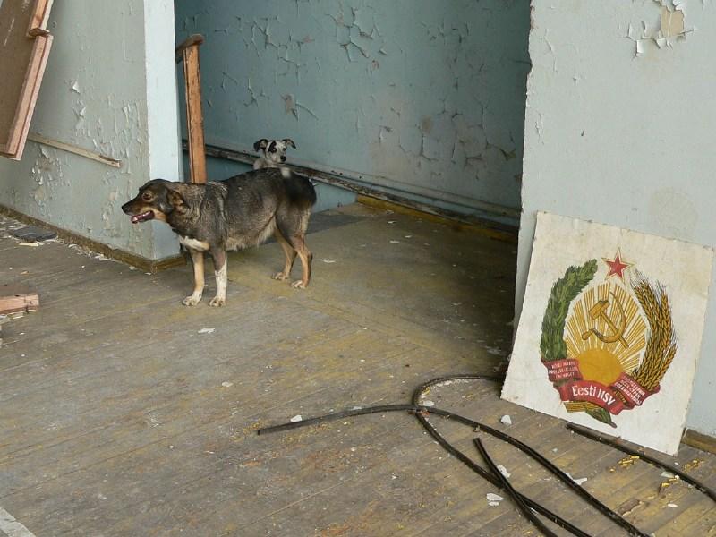 фото альбом Поездка в Зону Отчуждения Собаки там скучают за людьми