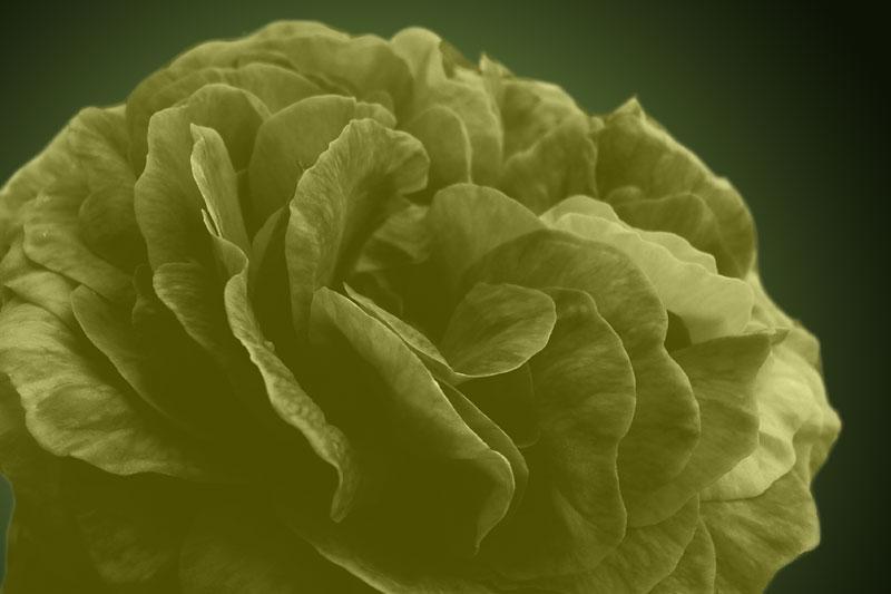 фото альбом Не устоять перед цветением Цветы