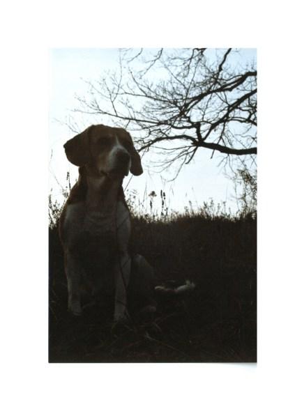 фото альбом Бигль - маленький гончий пес. Фото Биглей которые у меня с Июня 1996 года