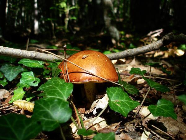 фото альбом Грибы-загадочный мир Ищу грибы в лесах и не только.