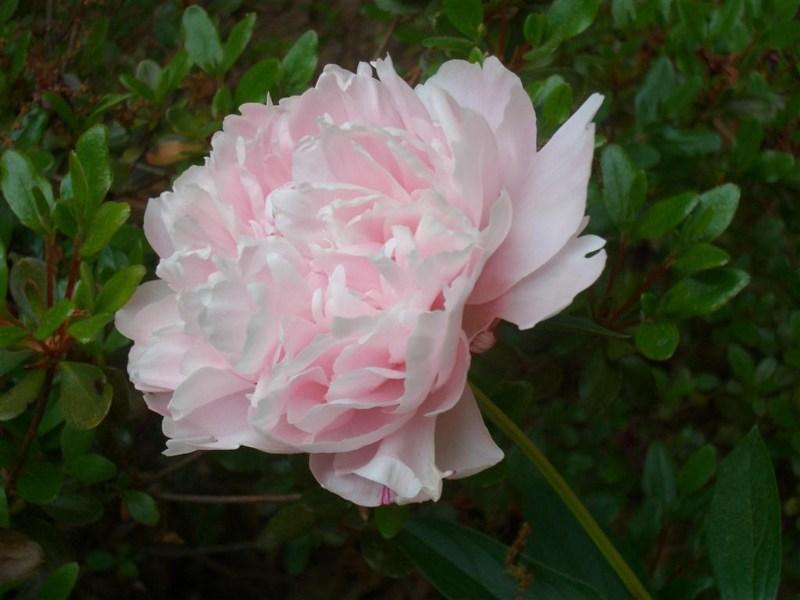 фото альбом Flowers