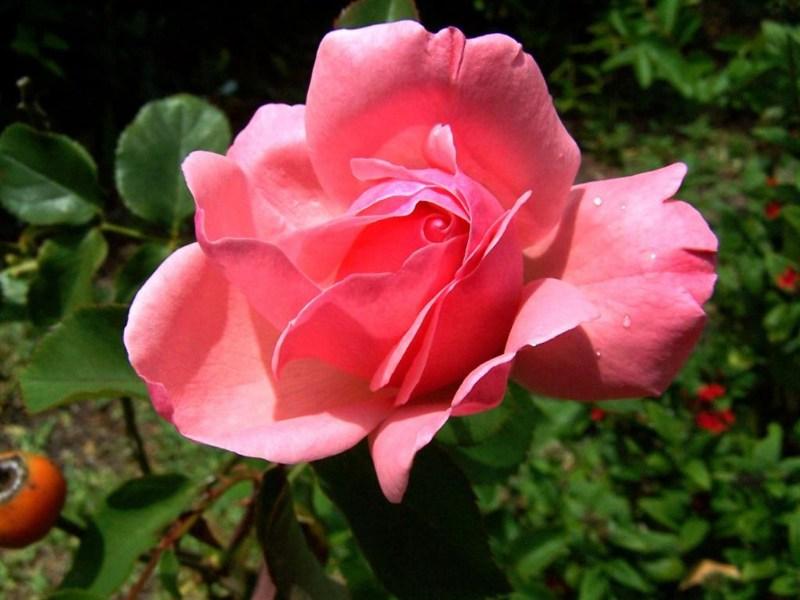 фотографии альбом Flowers