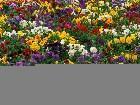 фото - Flowers