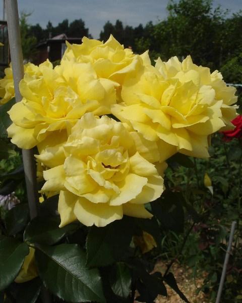 фотографии альбом цветочки весна-лето 2006
