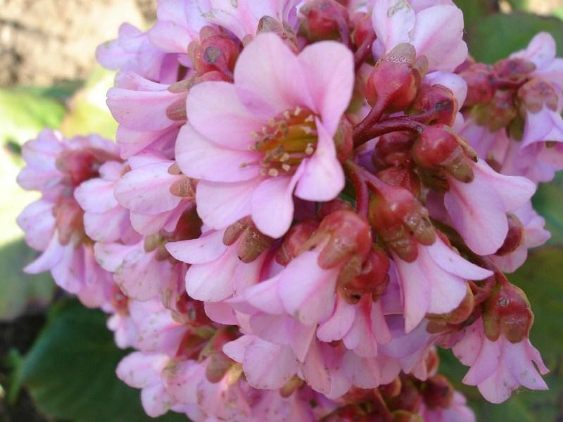 фото альбом цветочки весна-лето 2006