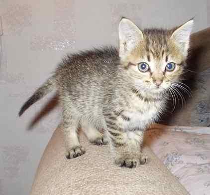 фото альбом Котята ищут дом котята ищут дом