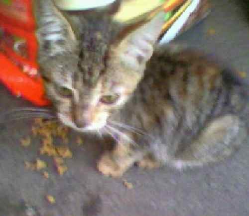 фотографии альбом Котята ищут дом котята ищут дом