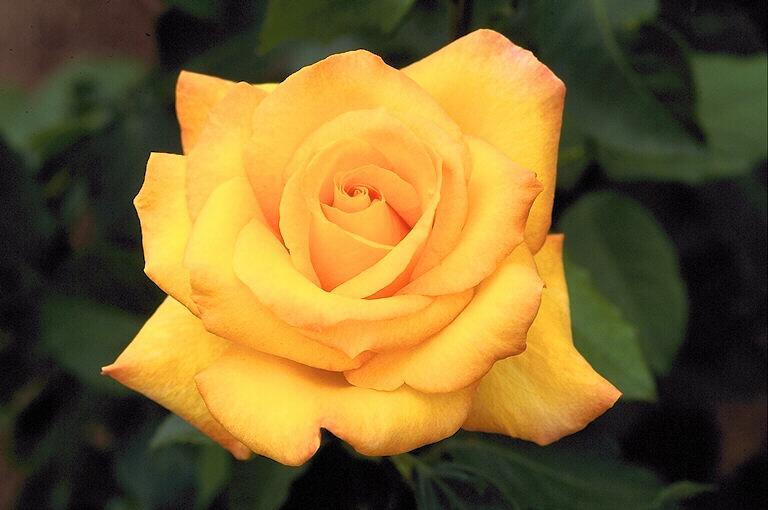 фото альбом Цветы Flora