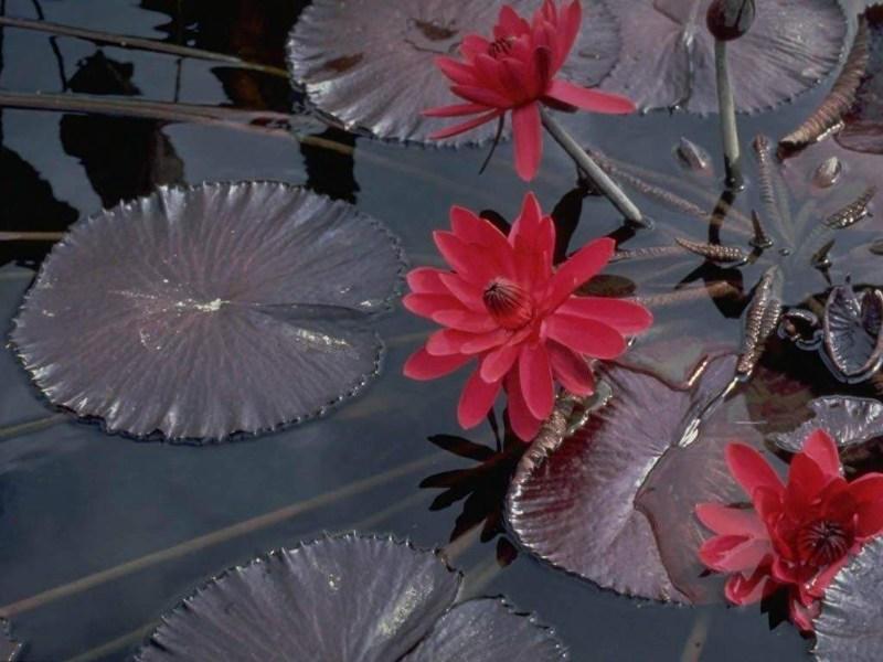 фото альбом Леса, озера - Природа