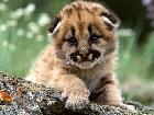 фотографии - животные - Мелкие дикие зверюшки