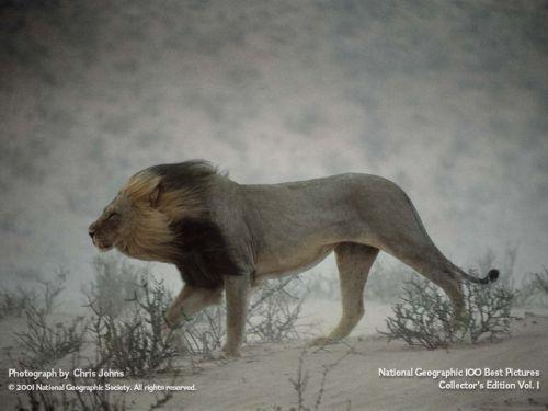 Красивые фотографии животных Водный и земной мир . Животные