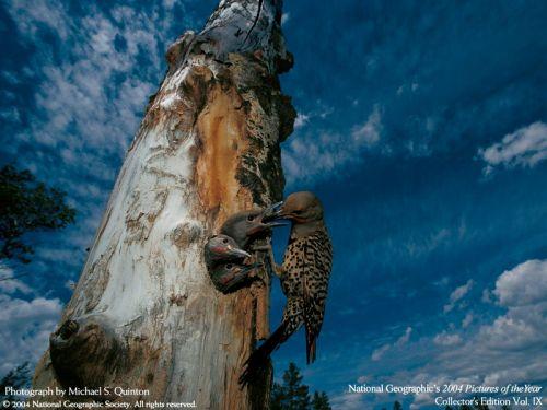 Красивые фото животных Водный и земной мир . Животные