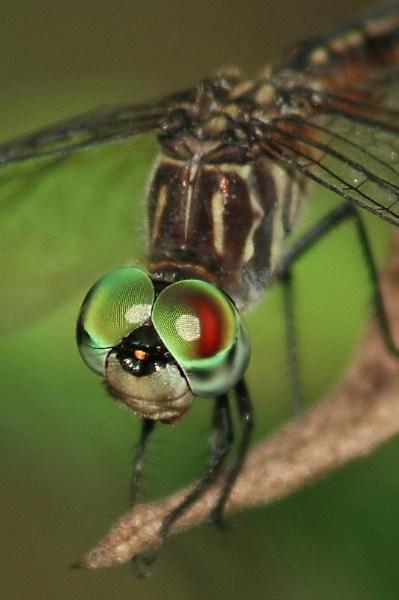 фото насекомых цифровые фото увелич фото насекомых