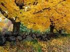 фотографии - красивые фотографии - Природа