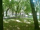 фотографии - парк Гоголя 2 - Природа Нежина