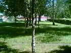 фотографии - парк Гоголя 1 - Природа Нежина