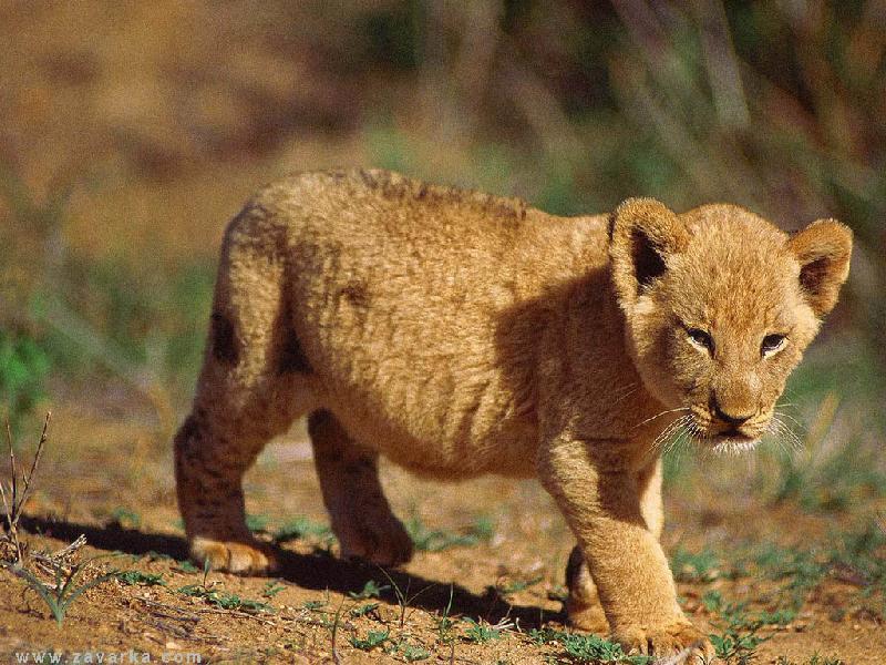 фотографии альбом животные животные
