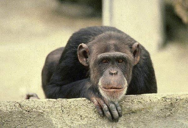 фото альбом животные животные