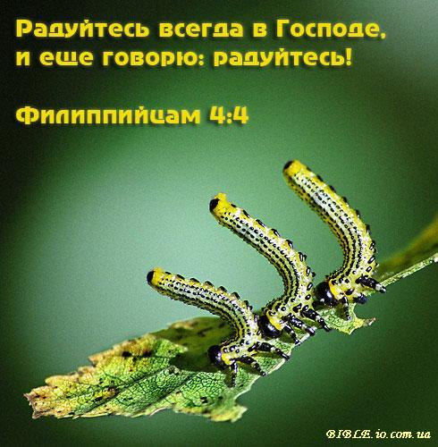 Здесь большое колличество Христианских открыток, картинок, фотог Радуйтесь всегда в Господе, и ещё говорю: ........