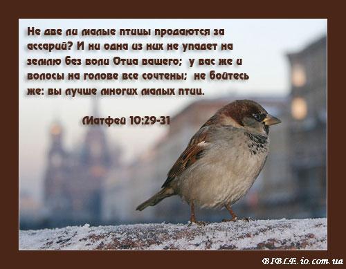 Здесь большое колличество Христианских открыток, картинок, фотог Не две ли малые птицы продаються за ассарий?